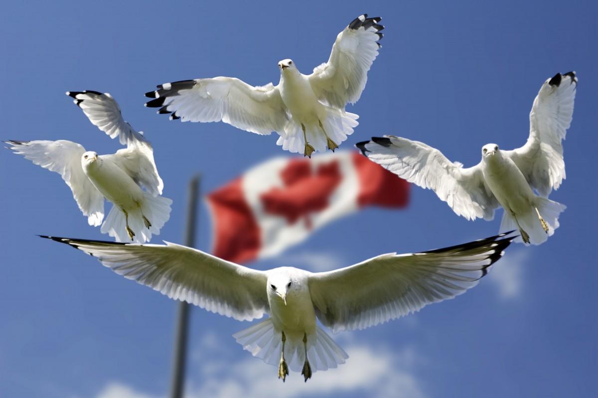加拿大国旗.png