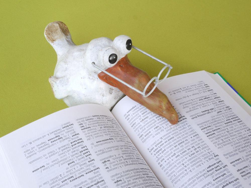 小鸟阅读英文.jpg