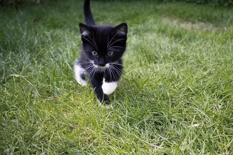 小黑猫.jpg